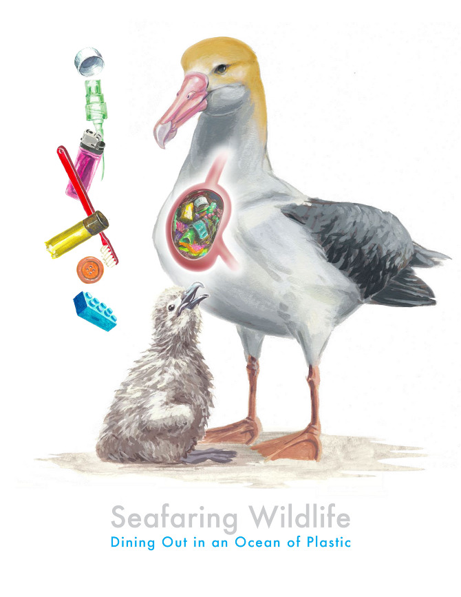 The great pacific garbage patch albatrosses clip